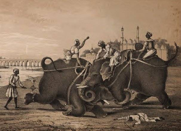 Elephant Fight, from Pelham Richardson Publishers, c. 1850.  Public Domain Image.