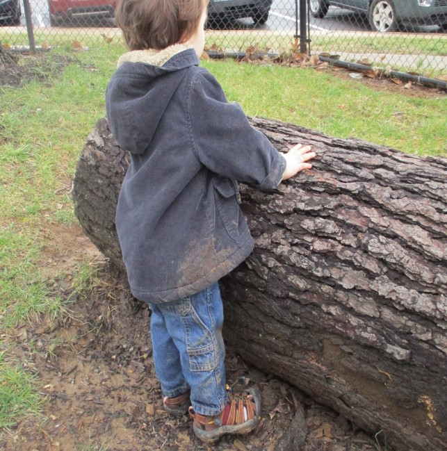 child standing by climbing log