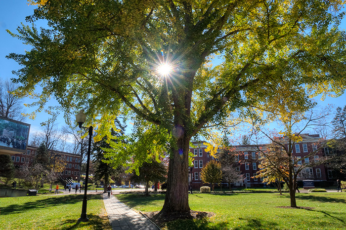 campus tree with sun shinning through leaves